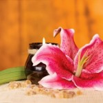 Flower Feng Shui: Beauty and Grace in Your Home