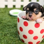 How to Save Money When You Have Pets
